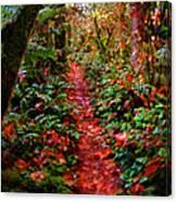 The Trail At Rainbow Falls Washington Canvas Print