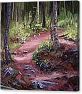 The Trail Series - Sunlight In The Wood Canvas Print