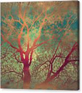 The Tree Called Beautiful Canvas Print