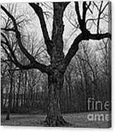 The Tree In The Park Canvas Print