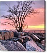 The Tree V Canvas Print