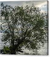 The Tree With His Feet In Water Canvas Print