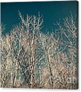 The Trees Of Teal Canvas Print