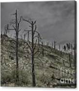 The Trees That Were Canvas Print