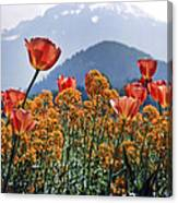 The Tulips In Bloom Canvas Print