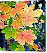 The Turning Leaves Canvas Print
