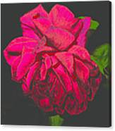 The Ultimate Red Rose Canvas Print