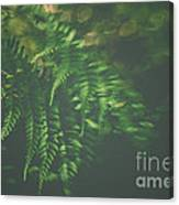 The Understory Canvas Print