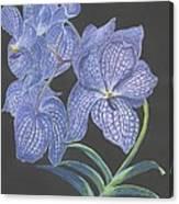 The Vanda Orchid Canvas Print