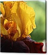 The Velvet Iris Canvas Print