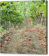 The Vines Canvas Print