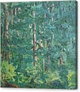 The Vosges Forest Canvas Print
