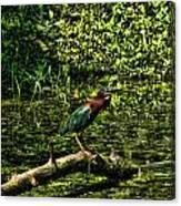 The Wader Canvas Print