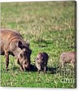 The Warthog Family On Savannah In The Ngorongoro Crater. Tanzania Canvas Print