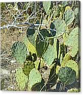 Cedar Park Texas Prickly Pear Cactus Canvas Print
