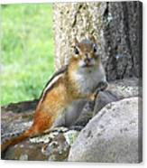 The Watching Chipmunk Reclines Canvas Print