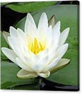 The Water Lilies Collection - 04 Canvas Print