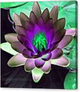 The Water Lilies Collection - Photopower 1114 Canvas Print