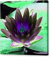 The Water Lilies Collection - Photopower 1116 Canvas Print