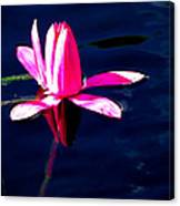 The Water Lily... Canvas Print