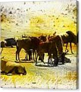 The Waterhole  Canvas Print