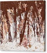 The Way Through The Woods 2 Canvas Print