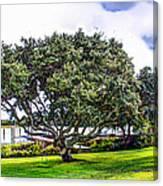 The Wedding Tree Canvas Print