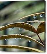 The Wet Of The Rain V2 Canvas Print