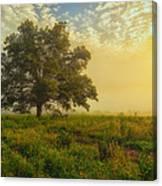 The White Oak Tree Canvas Print