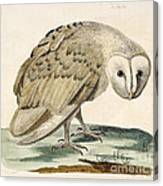 The White Owl Canvas Print