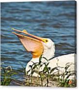 The White Pelican Canvas Print