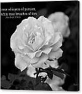 The White Rose Breathes Of Love Canvas Print