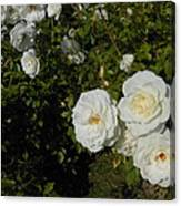 The White Rose Is A Dove Canvas Print