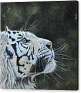 The White Tiger And The Butterfly Canvas Print