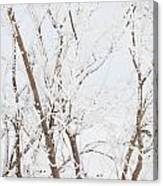 The Whites Of Winter Canvas Print