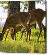 The Whitetail Deer Of Mt. Nebo - Arkansas Canvas Print