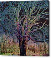 10994 The Widow Tree Canvas Print