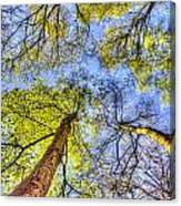 The Wild Forest Canvas Print