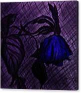 The Wilted Blue Rose Canvas Print
