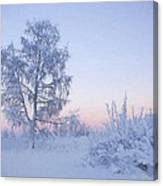 The Winter Light Canvas Print