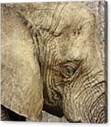 The Wise Old Elephant Canvas Print