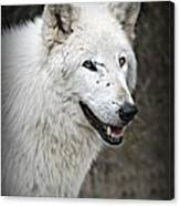 The Wolf. Canvas Print