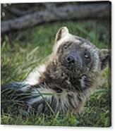 The Wolverine Skunk Bear Happy Face Canvas Print