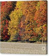 The Wonder Of Fall Canvas Print