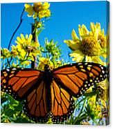 The Wonderful Monarch 3 Canvas Print