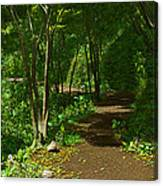The Wooded Path... Canvas Print