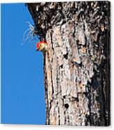 The Woodpecker Is In Canvas Print