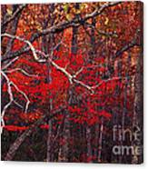 The Woods Aflame In Red Canvas Print