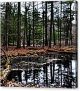 The Woods Reflected Canvas Print