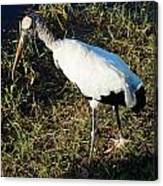 The Woodstork Canvas Print